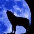 wolfuli
